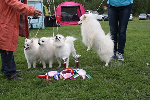 bamse hund anna